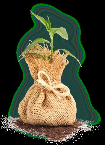 забота о растении
